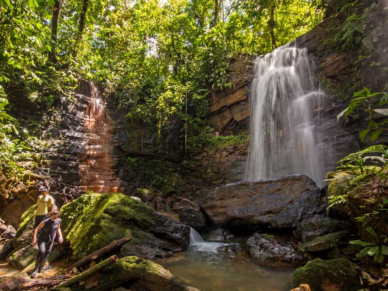 Image result for amazon rainforest tours
